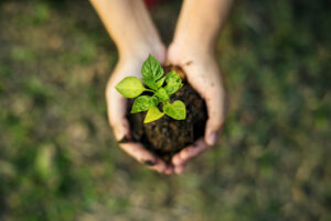 Person holding soil with plant sprouting - Sustainability - Eco Flexibles